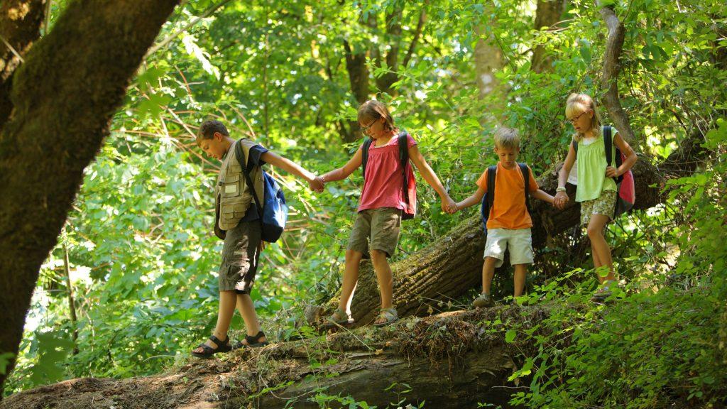 Wald Kinder Naturverbundenheit
