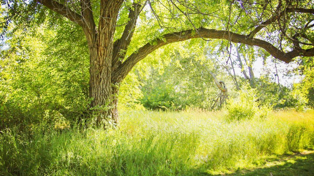 Die Heilkraft der Natur