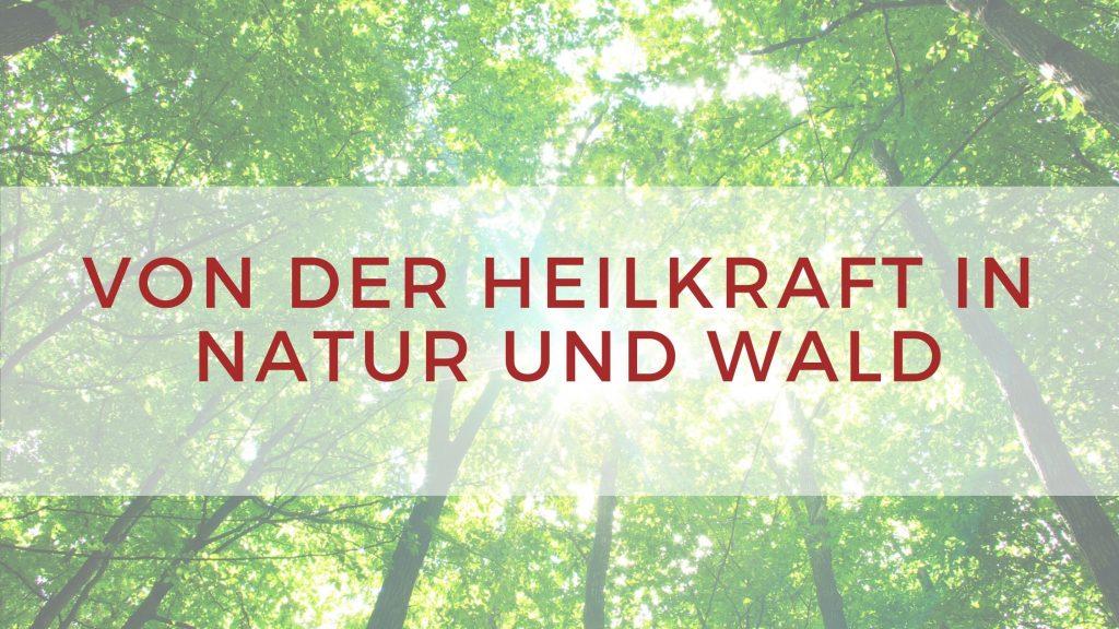 Heilkraft in Natur und Wald