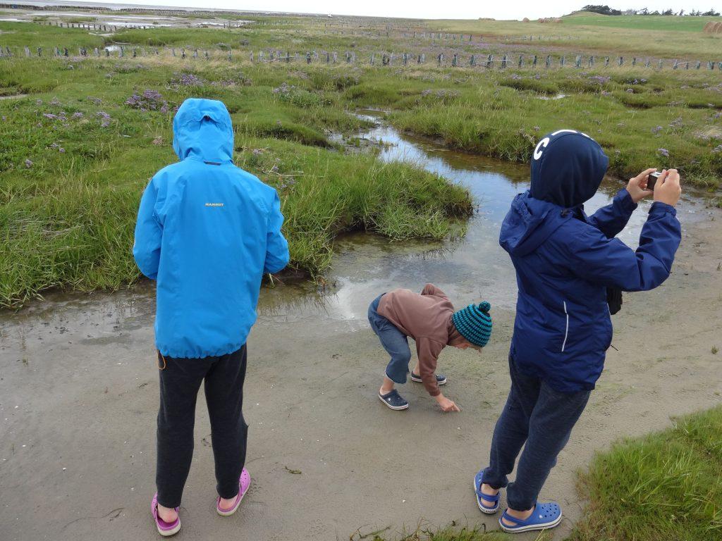 Dänemarkt Urlaub Natur