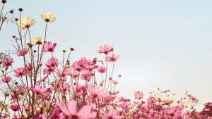 Natur Blumenwiese